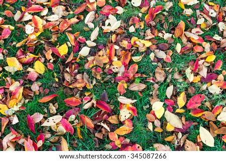Colorful fall leaves on green grass background texture - stock photo