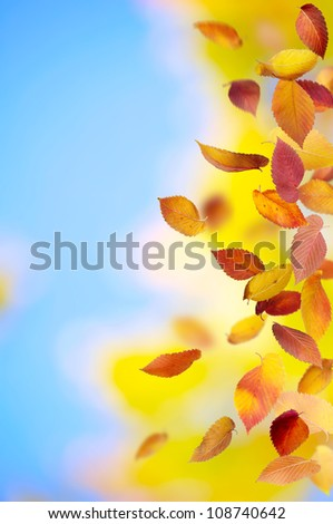 Colorful falling leaves in autumn - stock photo