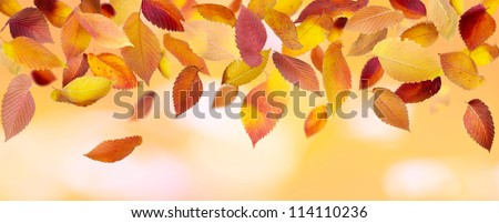 Colorful falling leaves on autumn background - stock photo