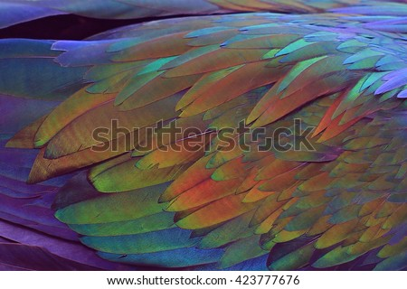Colorful feathers background - stock photo