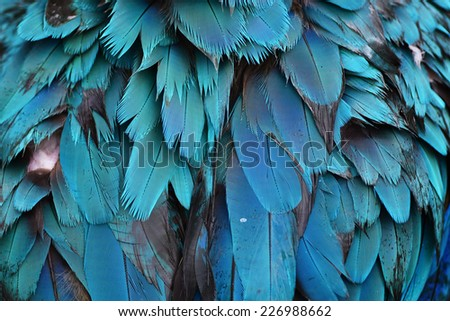 Colorful feathers, Harlequin Macaw feathers background texture - stock photo