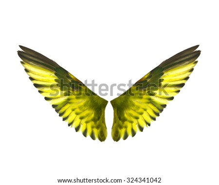 Colorful feathers, lovebird  feathers On a white background - stock photo