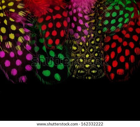 Colorful feathers on black background - stock photo