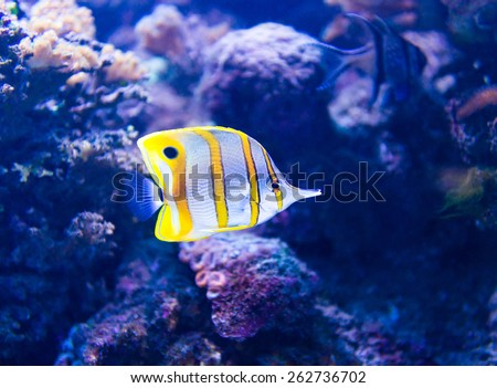 Colorful fish in aquarium saltwater world - stock photo