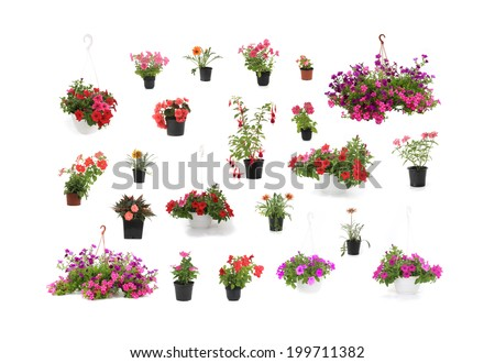 Colorful flover close-up isolated on a white background - stock photo