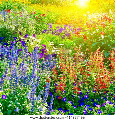 Colorful flower bed illuminated by sunlight - stock photo