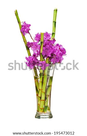 Colorful flower bouquet from purple rhododendron flowers on branch and green bamboo arrangement centerpiece in glass vase isolated on white background. Closeup. - stock photo