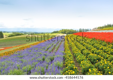 Colorful flower field in Hokkaido, Japan