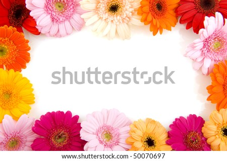 colorful flower frame with Gerber in different colors - stock photo