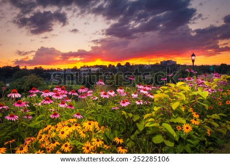 Colorful Flower Garden And Light Post Under Sunset