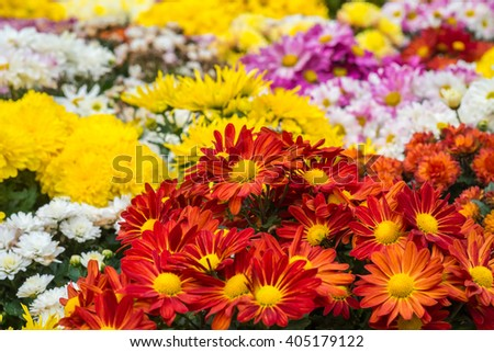 Colorful Flower in garden