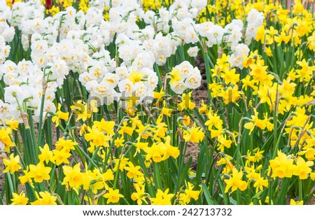 Colorful flower in the park. Spring landscape . - stock photo