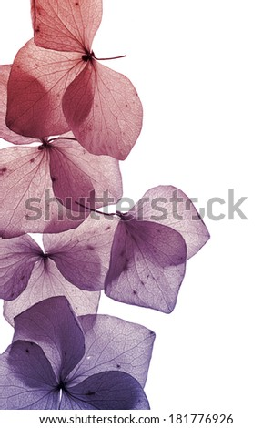 colorful flower petals close-up - stock photo