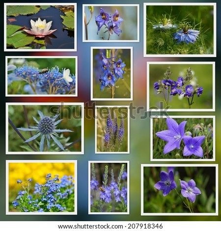 Colorful flowers and herbs from fields and meadows and gardens - photo collage - stock photo