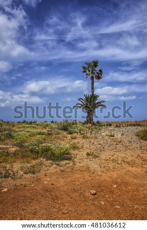 Colorful flowers and palm tree in the desert