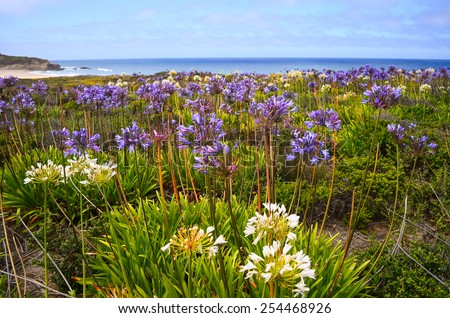 colorful flowers during spring at Half Moon Bay, California - stock photo