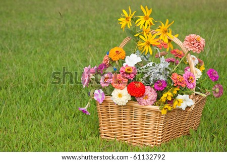 Colorful flowers in a wicker basket on green grass background