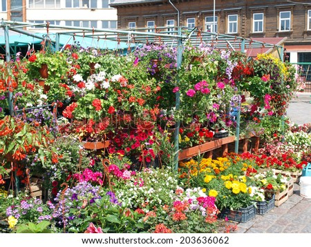Colorful flowers in boxes and hanging baskets on market