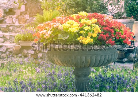 colorful flowers in the garden,multicolor flowers - stock photo