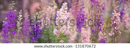 Colorful flowers in the garden with pastel filter - stock photo