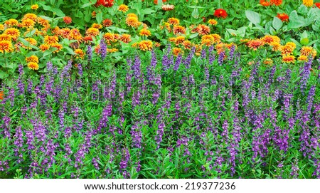 Colorful flowers in the gardens. - stock photo