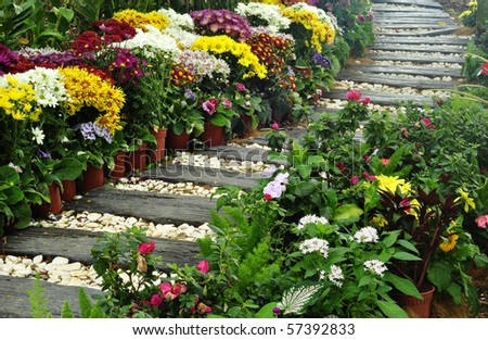 colorful flowers on the garden - stock photo