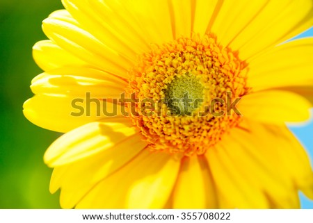 colorful flowers on the outdoor park, gerbera flower