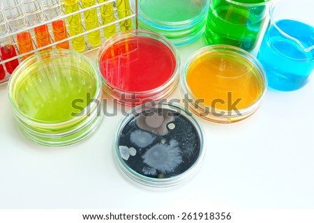 Colorful fluid in  glass ware for laboratory use focusing center at colony of yeast