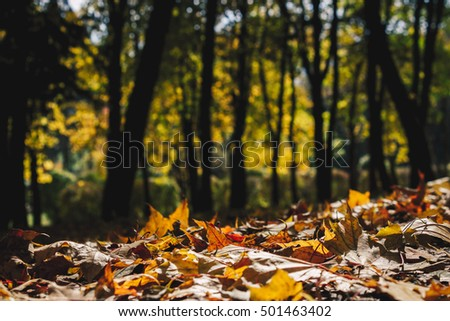 Colorful foliage in the autumn park Fall leaves Autumnal trees Maple in vintage color