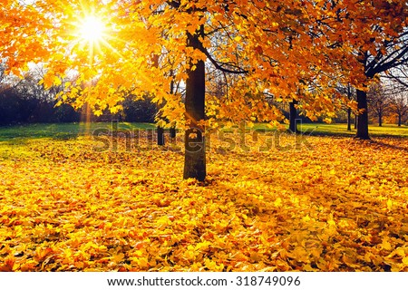 Colorful foliage in the sunny autumn park - stock photo