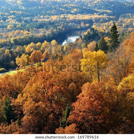 Colorful forest hills in fall. Sigulda, Latvia. - stock photo