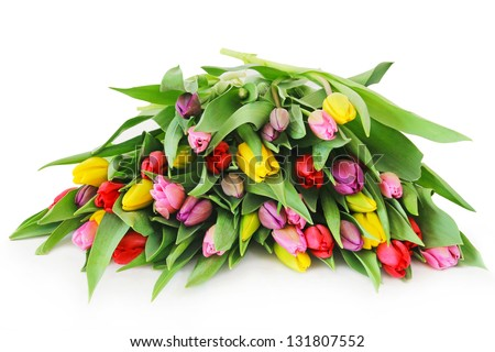 Colorful fresh spring tulips flowers on white background - stock photo
