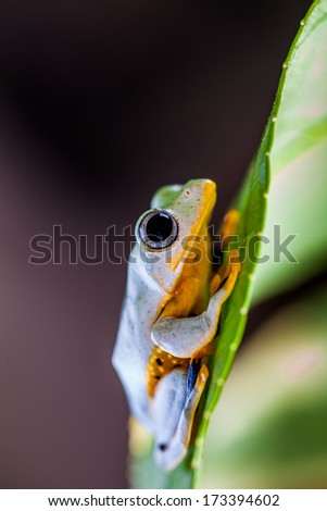 Colorful frog in the jungle