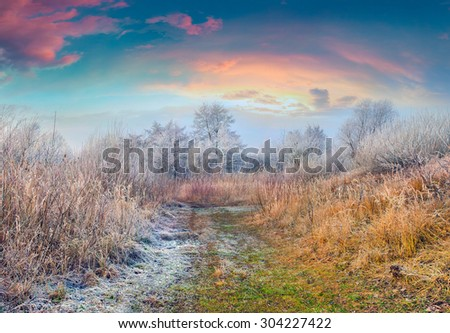 Colorful frosty morning in the autumn forest - stock photo