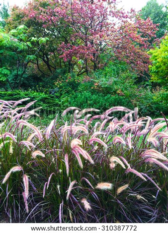 Colorful garden with ornamental grass. Early autumn. - stock photo
