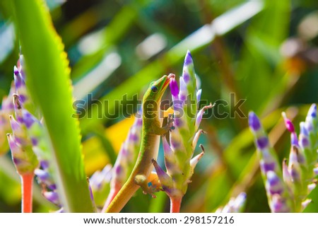 Colorful  geckos feeding on colorful plants - stock photo