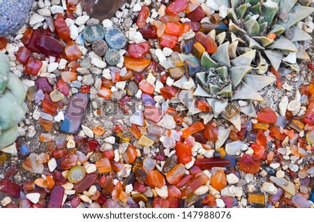 colorful gem stones with tropical plants background