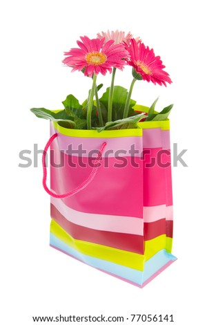 Colorful Gerber flowers in cheerful pink striped bag for celebration - stock photo