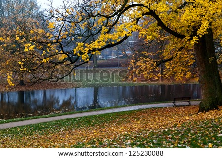colorful golden autumn in the park