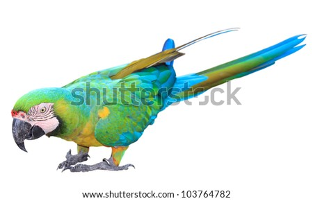 Colorful green parrot macaw isolated on white background - stock photo