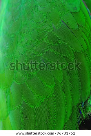 Colorful green parrot wing Plumage - stock photo