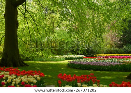 Colorful green tree and spring flowers  in holland park Keukenhof, Netherlands - stock photo