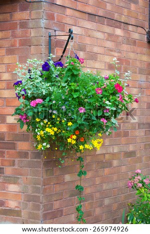 Colorful hanging basket of summer plants attached to a brick wall. - stock photo