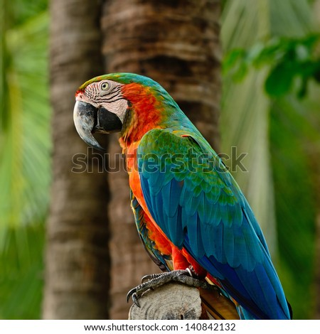 Colorful Harlequin Macaw aviary, side profile - stock photo