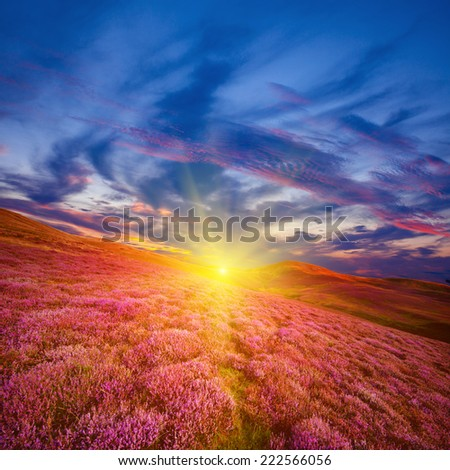Colorful hill slope covered by violet heather flowers and sun-rays beaming beyond the edge. Pentland hills, Scotland - stock photo