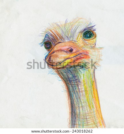 Colorful illustration of Ostrich head. Drawing is handmade, colored pencils. - stock photo