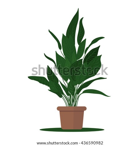Colorful illustration plant in pot.