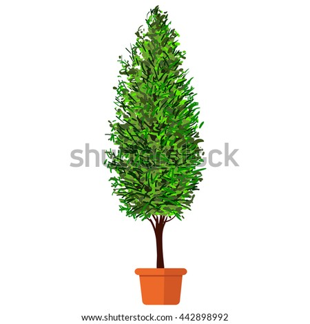 Colorful illustration plant in pot. Thuja.