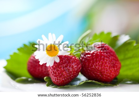 colorful image of strawberries arranged with a leaf and chamomile