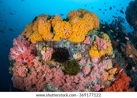 Colorful invertebrates compete for space to grow on a healthy, current-swept reef in Indonesia. This part of the world harbors extraordinary marine biodiversity. - stock photo